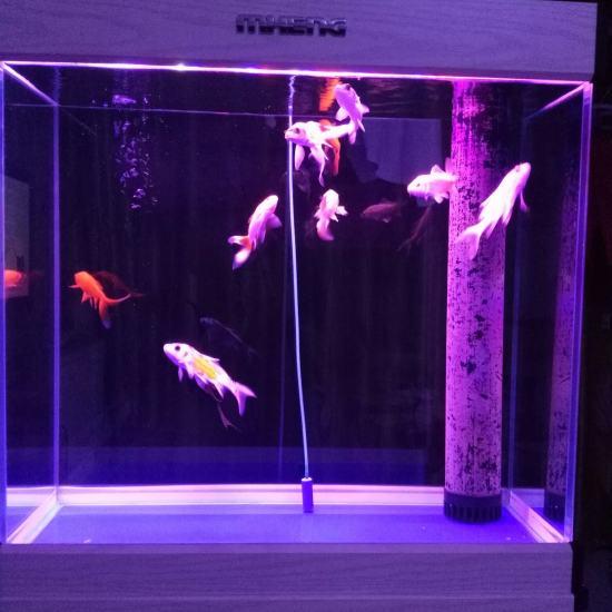 #我的鱼望#多多学习,养好鱼 深圳观赏鱼