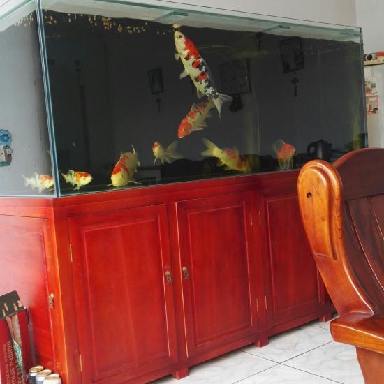 #我的鱼望#就保持这样 鱼不要生病? 就行啦 温州龙鱼论坛 温州龙鱼第2张