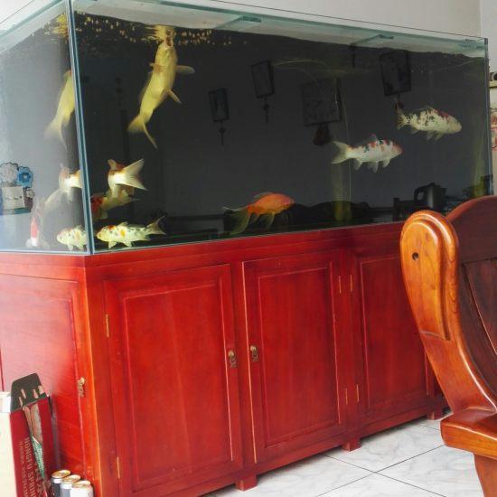 #我的鱼望#就保持这样 鱼不要生病? 就行啦 温州龙鱼论坛 温州龙鱼第3张