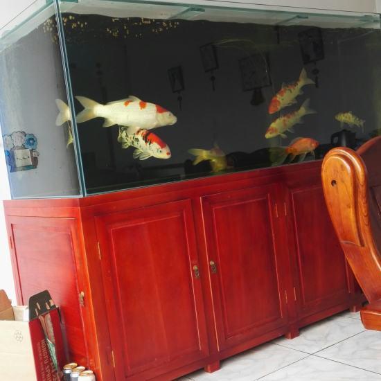 #我的鱼望#就保持这样 鱼不要生病? 就行啦 温州龙鱼论坛 温州龙鱼第4张