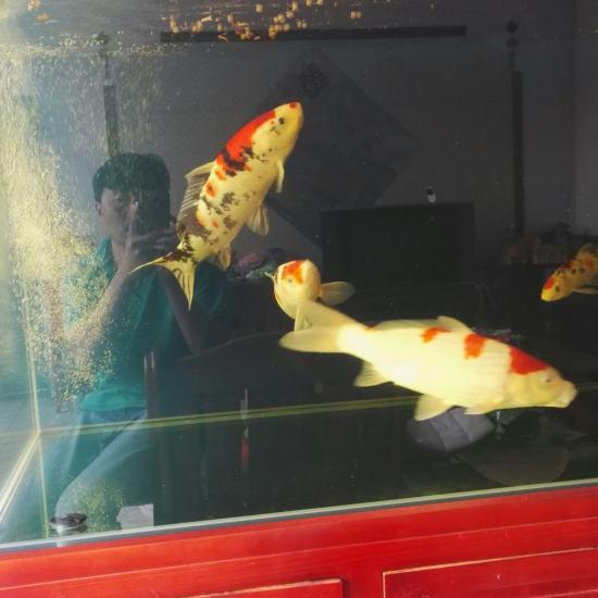 #我的鱼望#就保持这样 鱼不要生病? 就行啦 温州龙鱼论坛 温州龙鱼第7张