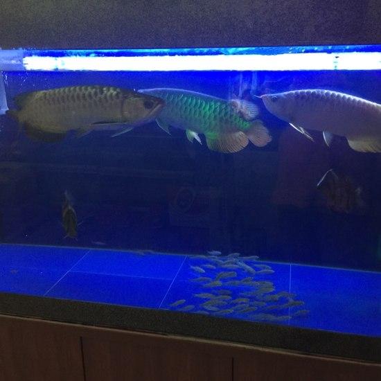 深圳鱼缸定做定制闲来拍一拍 深圳观赏鱼 深圳龙鱼第3张
