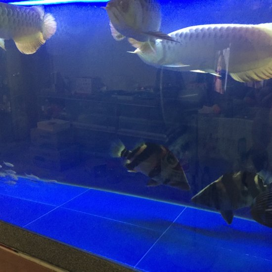 深圳鱼缸定做定制闲来拍一拍 深圳观赏鱼 深圳龙鱼第4张