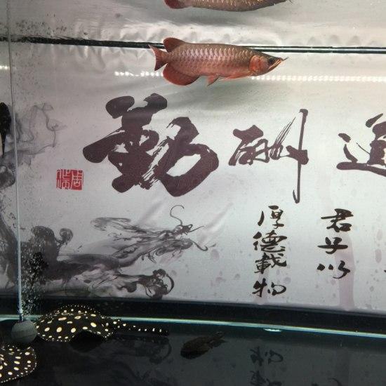 今天刚买的,能接着用么,不会出问题吧!温州龙鱼 温州水族批发市场 温州龙鱼第4张