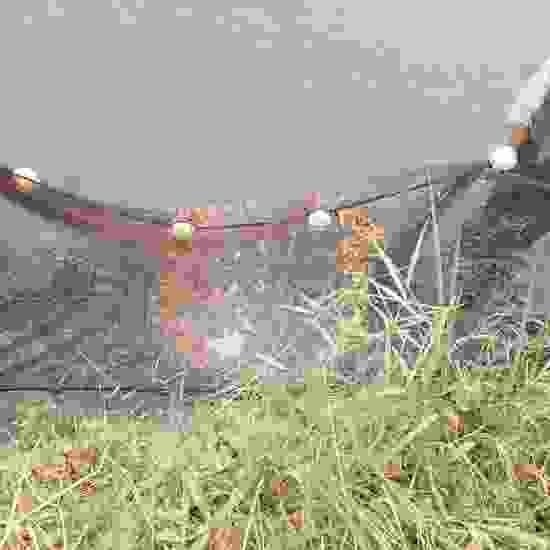 温州鱼缸批发市场弄点红草回家喂龙, 温州龙鱼论坛 温州龙鱼第5张