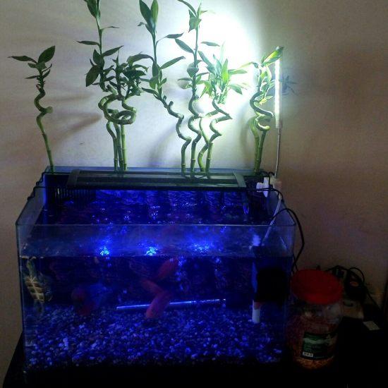 早餐时间,外加室内加湿时间 深圳观赏鱼 深圳龙鱼第1张