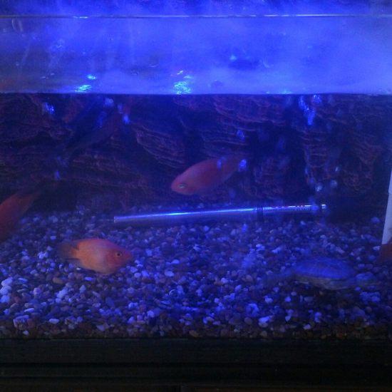 早餐时间,外加室内加湿时间 深圳观赏鱼 深圳龙鱼第4张