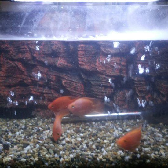 早餐时间,外加室内加湿时间 深圳观赏鱼 深圳龙鱼第6张