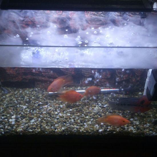 早餐时间,外加室内加湿时间 深圳观赏鱼 深圳龙鱼第7张
