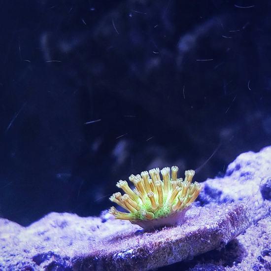 晒晒缸里的小生命 鱼友温州红龙鱼们多多关注哟 温州龙鱼论坛 温州龙鱼第3张