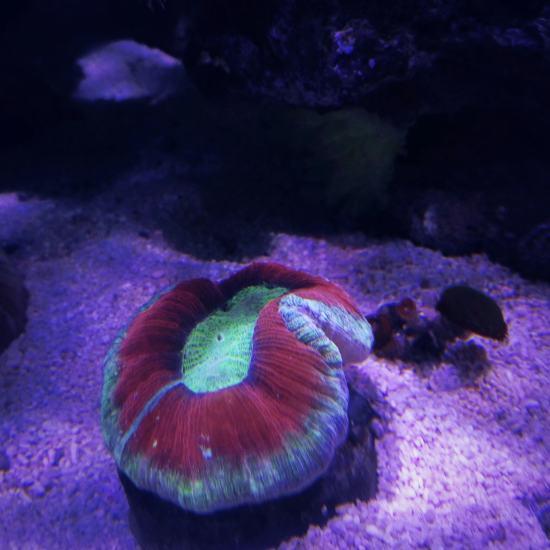 晒晒缸里的小生命 鱼友温州红龙鱼们多多关注哟 温州龙鱼论坛 温州龙鱼第4张