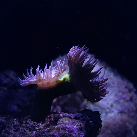 晒晒缸里的小生命 鱼友温州红龙鱼们多多关注哟 温州龙鱼论坛 温州龙鱼第6张