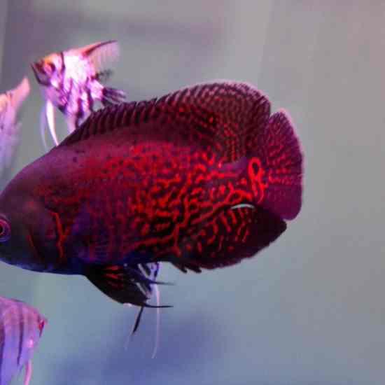 #我的鱼望#能拥有超大缸… 温州水族批发市场