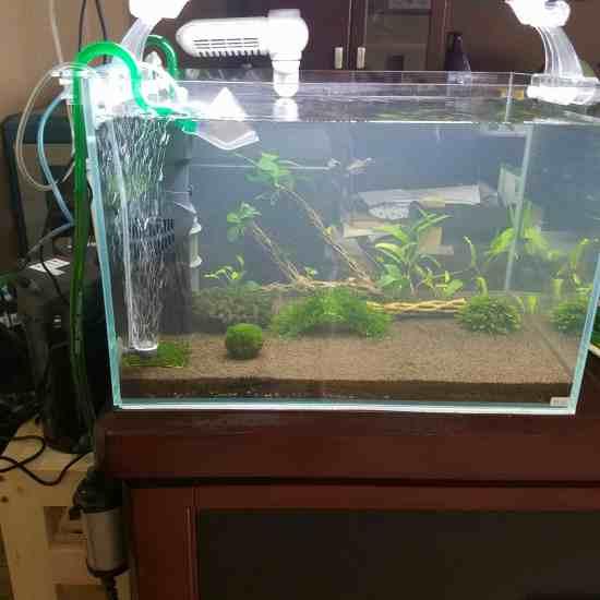 新开60缸一个,准备养虾,已经5天了。水还是白蒙蒙的,换了三次水,不见好转,郁闷 温州龙鱼论坛