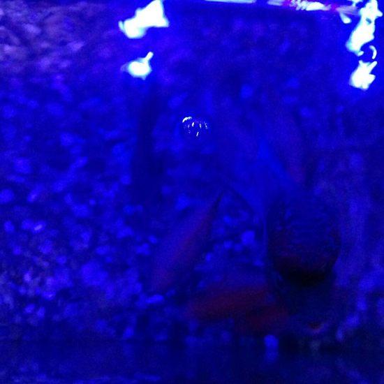深圳龙鱼我的罗汉为什么颜色发暗 深圳龙鱼论坛 深圳龙鱼第9张