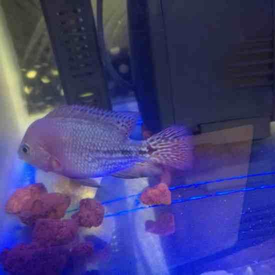 我的小无敌,美美哒 温州龙鱼论坛