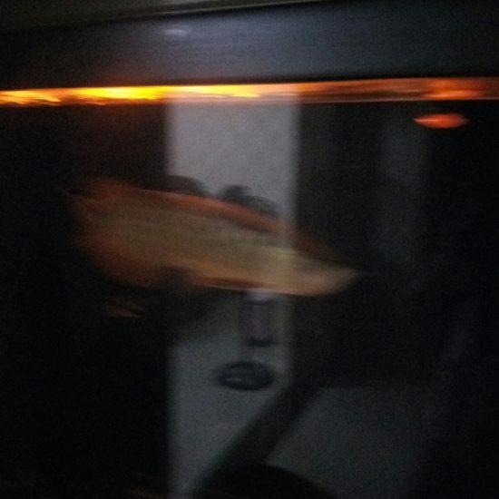 今天刚买的小夜灯。 温州龙鱼论坛 温州龙鱼第1张