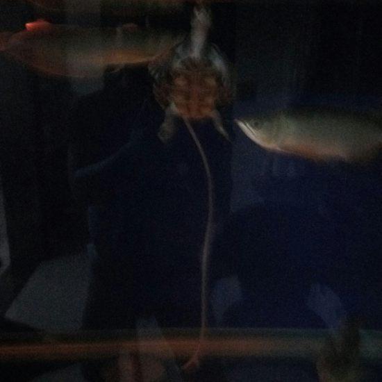 今天刚买的小夜灯。 温州龙鱼论坛 温州龙鱼第3张