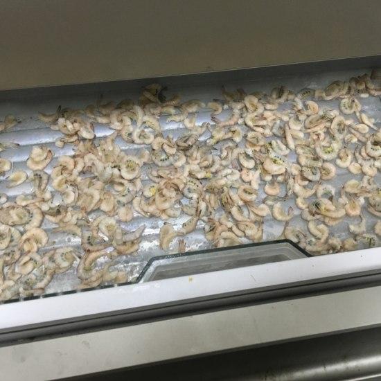 六条小鱼每天能吃掉50多只小虾。我看着很开心[ciya] 温州水族批发市场