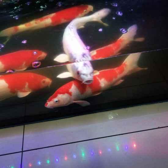 小鱼特别爱插缸子,怎么处理效果好呢,是那种虫和细菌呢,有知道的么 温州龙鱼论坛 温州龙鱼第6张