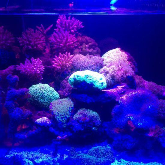 各种珊瑚,真漂亮 营口龙鱼论坛 营口龙鱼第1张