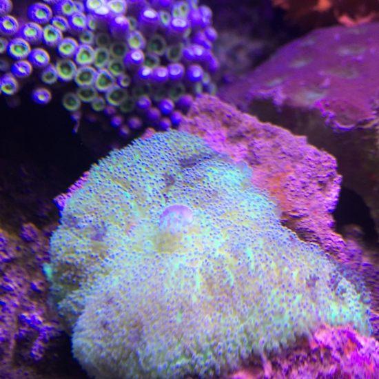 各种珊瑚,真漂亮 营口龙鱼论坛 营口龙鱼第2张