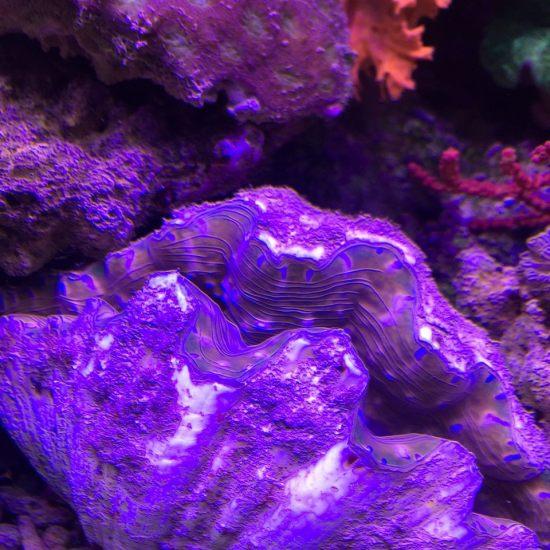 各种珊瑚,真漂亮 营口龙鱼论坛 营口龙鱼第3张