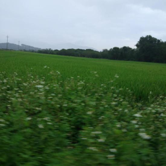 #我用相机为祖国点赞#祖国的乡村大地。
