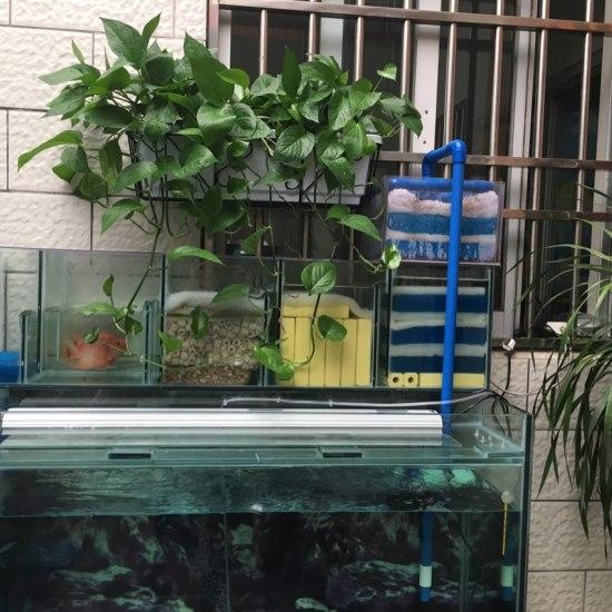今天虎挺明亮,植物也生长的很好,开心??