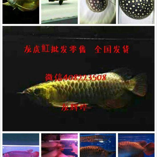微信408223508 广州水族批发市场 花地湾水族批发市场 第2张