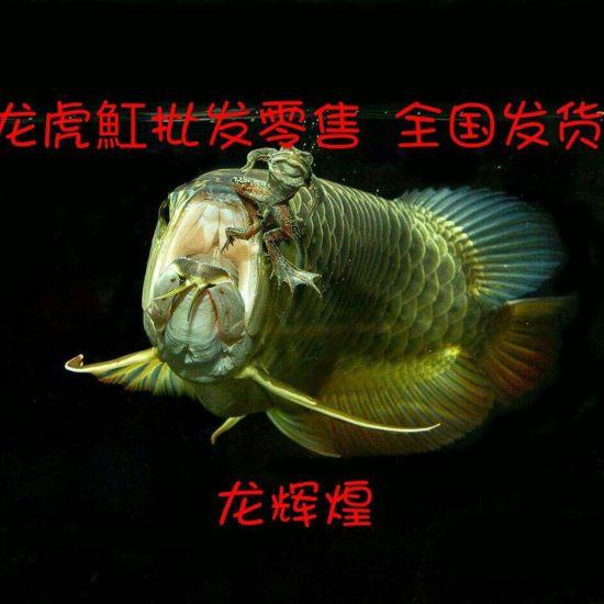 微信408223508 广州水族批发市场 花地湾水族批发市场 第4张