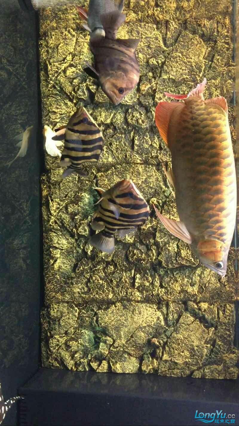 I havent posted in a long time Aquaculture Forum ASIAN AROWANA,AROWANA,STINGRAY The2sheet