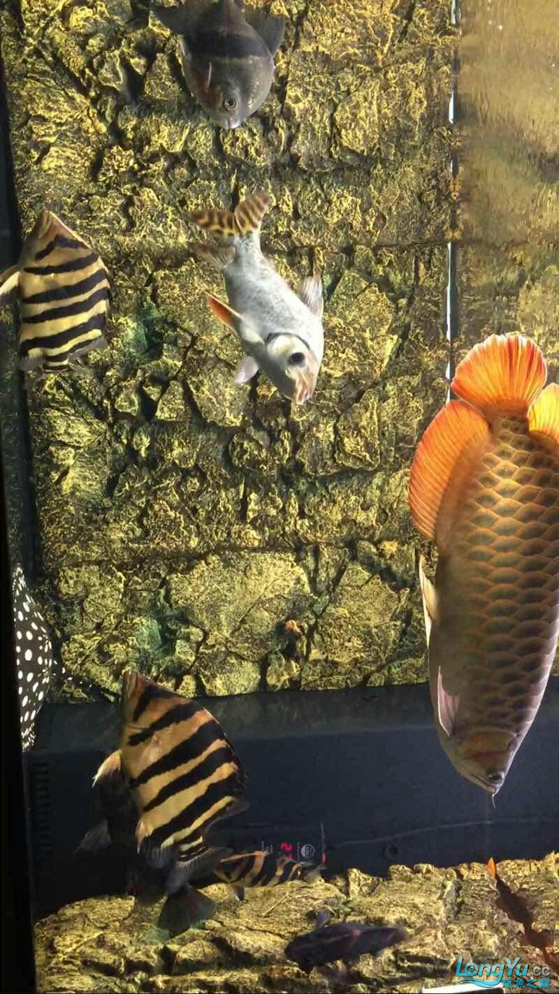 I havent posted in a long time Aquaculture Forum ASIAN AROWANA,AROWANA,STINGRAY The4sheet