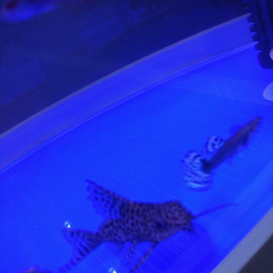 是鼠鱼吗 长春观赏鱼