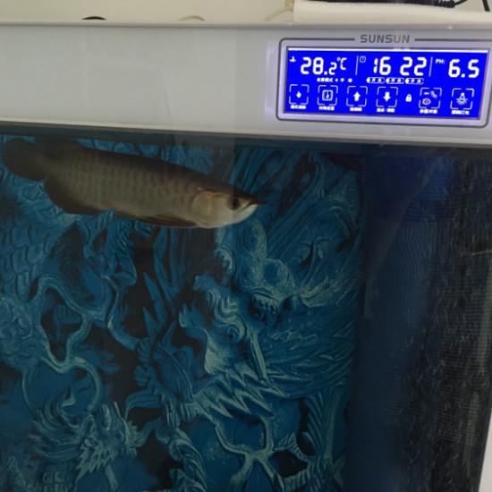 为什么换下水洗缸。PH重 6.8掉到6.5 太原龙鱼论坛