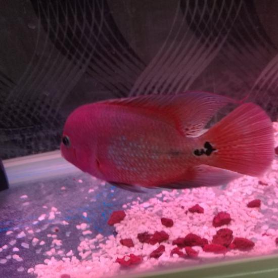 太原鱼缸定做大家早上好[haha] 太原观赏鱼 太原龙鱼第3张