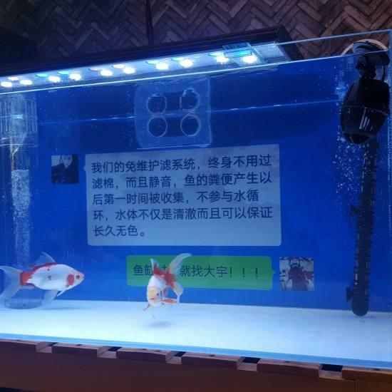 改鱼缸下过滤水族箱鱼缸灯管系统 太原龙鱼论坛 太原龙鱼第4张