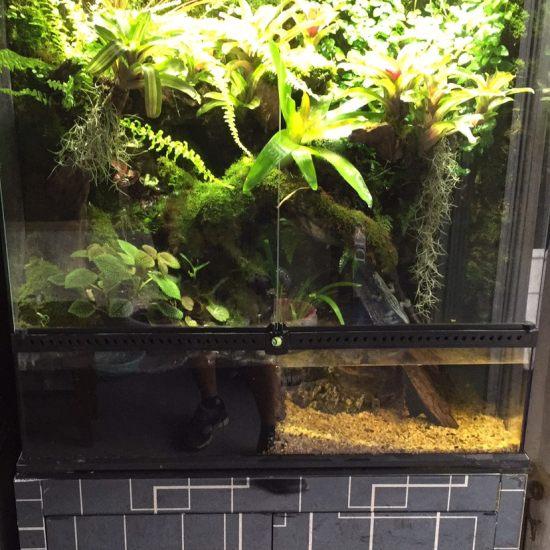 太原观赏鱼市场在哪里今天结束的一个雨淋缸,里面养点什么好呢!箭毒蛙还是…… 太原龙鱼论坛