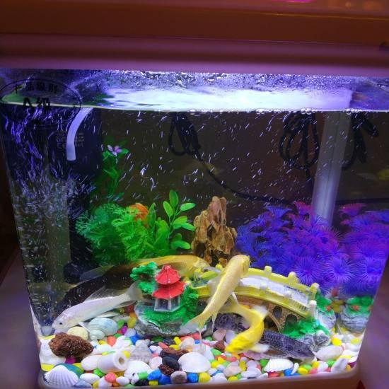 太原观赏鱼批发市场给鱼缸换水,锦鲤跳缸晒干,尾巴都断了,放水里竟然又活了!只是入 太原观赏鱼 太原龙鱼第4张