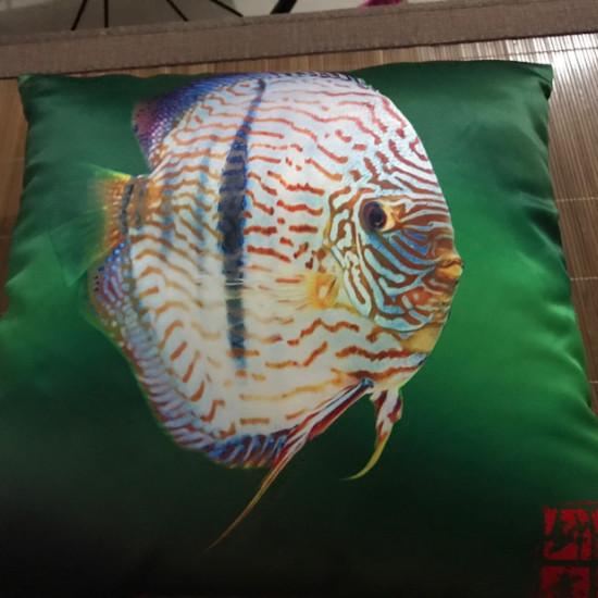 鱼邻送的[ciya][ciya] 太原龙鱼论坛 太原龙鱼第1张