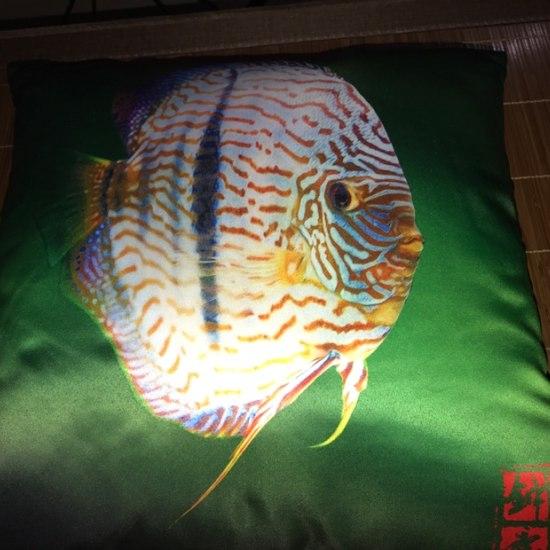 鱼邻送的[ciya][ciya] 太原龙鱼论坛 太原龙鱼第2张