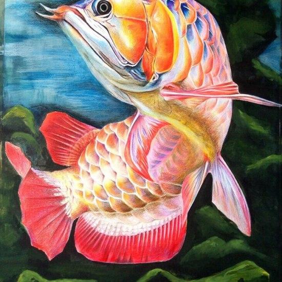 太原最大的花鸟鱼市场这个漂亮 太原龙鱼论坛