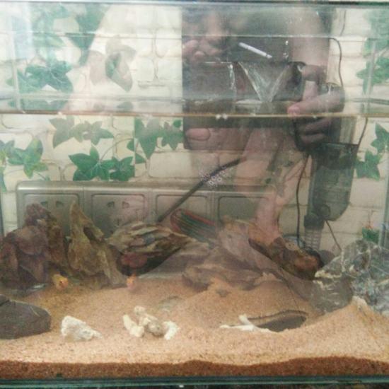 养鱼在于折腾,但是大缸又舍不得折腾,所以又开了小缸让自己折腾[ciya][ciy 太原观赏鱼 太原龙鱼第3张
