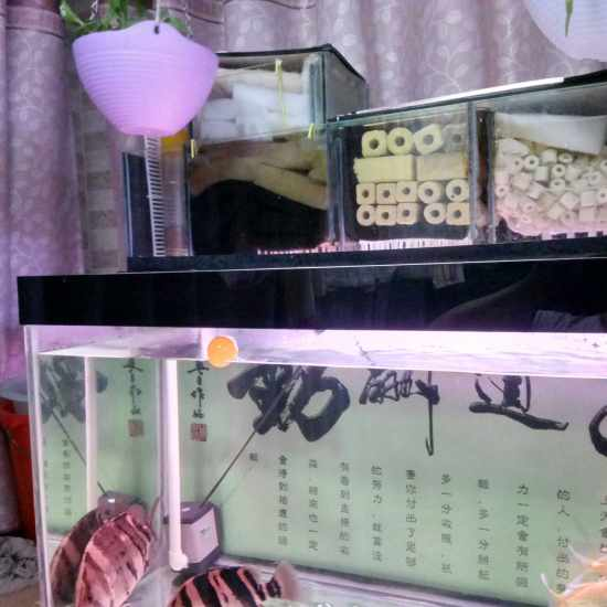 自己做的,一年多了,还挺好#DIY鱼缸# 成都龙鱼论坛 成都龙鱼第1张