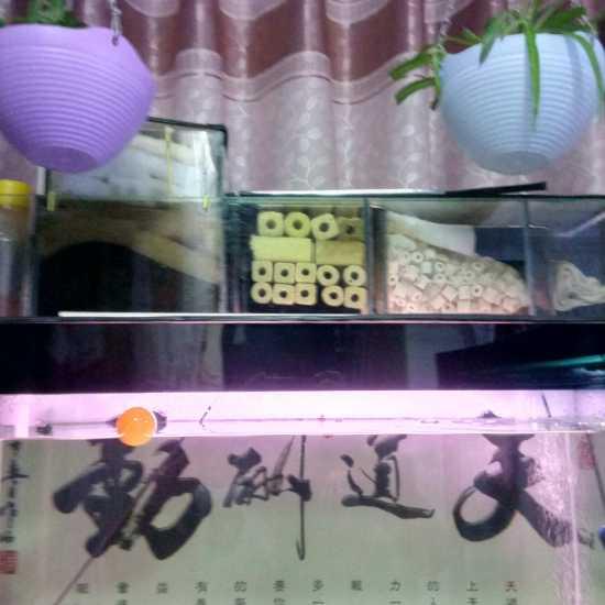 自己做的,一年多了,还挺好#DIY鱼缸# 成都龙鱼论坛 成都龙鱼第2张