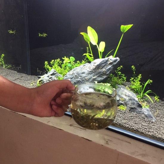一杯茉莉花茶配上青龙石成都市鱼缸批发市场与水草巧妙结合,啊!生活多么惬意!#我的 成都龙鱼论坛