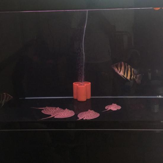#小绵羊·大气量#拍照质量不咋滴 但现场实拍 主养魟鱼 氧气要求高 目前使用的普 观赏鱼常见疾病 南通水族批发市场第1张
