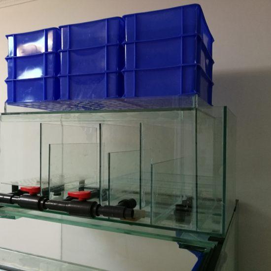 #小绵羊·大气量#新做的2米大缸,之前1.2米鱼缸用的是威卡气霸,感觉共振比较大 观赏鱼常见疾病 南通水族批发市场第2张