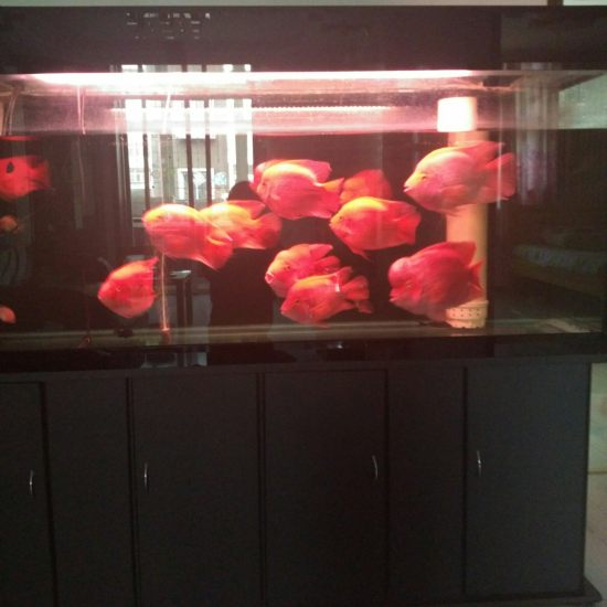 #小绵羊·大气量#这次的试用活动很是有诱惑力,我现在是一米七的鱼缸,饲养金刚鹦鹉