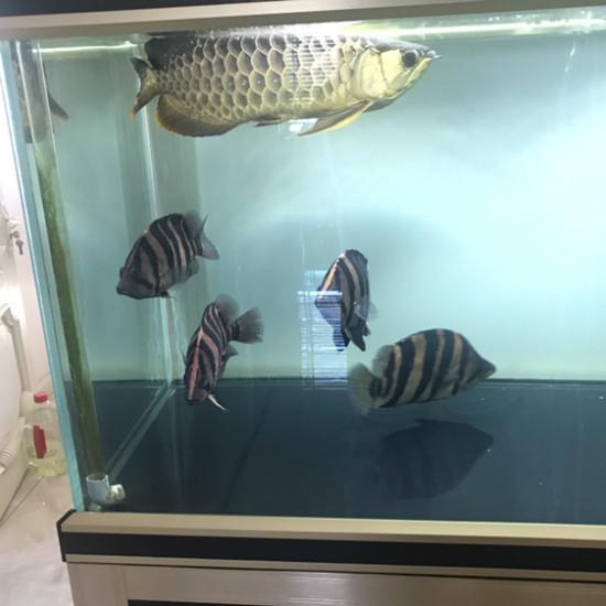 眼睛有点坏了 观赏鱼常见疾病 南通水族批发市场第1张